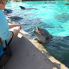 Everything at Sea World begs for food.
