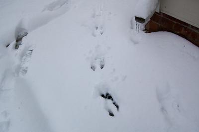 Bunny tracks?