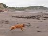 Watchet beach