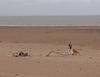 Dunster Beach
