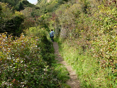 Coastal path down to Branscombe