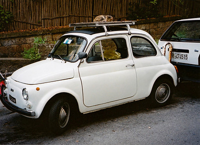 Fiat 500 with cat on roof