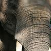 Elephant Whispers - where 6 orphaned elephants live