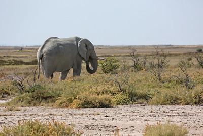 Southern Africa 2013 - Etosha Park