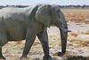 Etosha - Game Drive 2 - Elephants Heading Towards Water Hole (3)