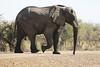Kavango River - Nunda Lodge Game Drive - Elephant Crossing Road to Water Hole 4