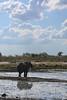 Kavango River - Nunda Lodge Game Drive - Elephant Drinking 4