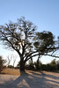 Kavango River - Nunda Lodge  - Morning Game Drive - Sunlight Filtering Through Tree