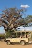 Kavango River - Nunda Lodge - Morning Game Drive - 4X4 Game Drive Vehicle by Tree