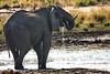 Kavango River - Nunda Lodge Game Drive - Elephant Drinking 3