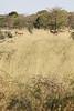 Kavango River - Nunda Lodge Game Drive - Eland in Grass