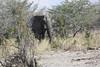 Kavango River - Nunda Lodge Game Drive - Elephant Crossing Road to Water Hole 1