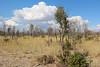 Kavango River - Nunda Lodge - Morning Game Drive - Grasslands