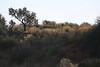 !Xaus Lodge - 4X4 Drive to Lodge - Male Lion on the Ridge