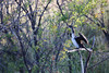 Victoria Falls - Zambezi River Sunset Cruise - Water Bird 20