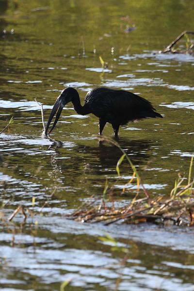 Victoria Falls - Zambezi River Sunset Cruise - Water Bird 17
