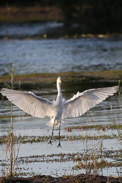 Victoria Falls - Zambezi River Sunset Cruise - Heron Landing
