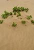 Swakopmund - Living Desert Tour - Dollar Bushes