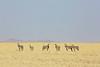 Drive North Towards Kuiseb Canyon - Zebra Herd