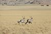 Drive North Towards Kuiseb Canyon - Oryx on the Run