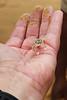Swakopmund - Living Desert Tour -  Palmato Gecko in the Hand