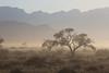 Drive North Towards Kuiseb Canyon - Tree in the Haze
