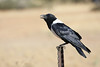 Drive North Towards Kuiseb Canyon - Rest Stop - Bird