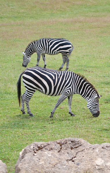 Zebra Stacking