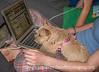 Gertie Checks Out the Computer Cursor