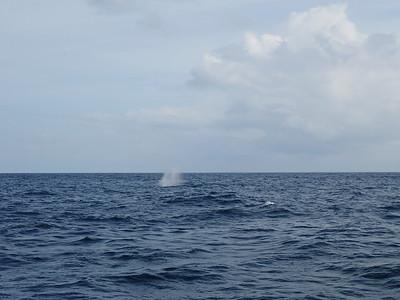 Sri Lanka - Mirissa - Whale Watching 020