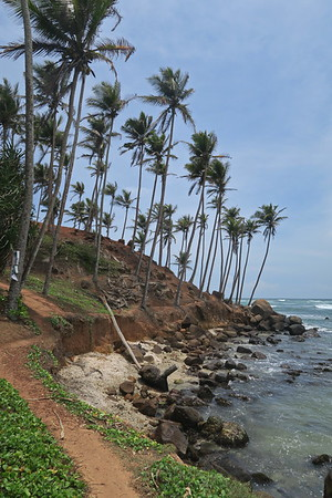 Sri Lanka - Mirissa - Coconut Hill 003