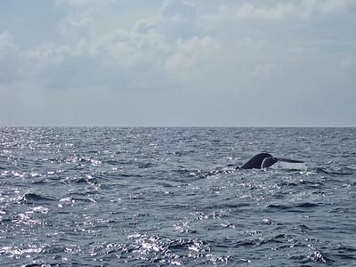 Sri Lanka - Mirissa - Whale Watching 060