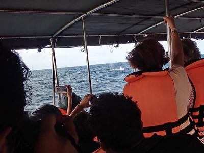 Sri Lanka - Mirissa - Whale Watching - There She Blows