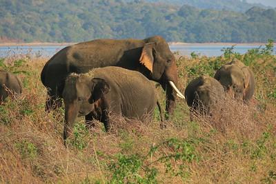 Sri Lanka 2018 - Colombo to Kandy