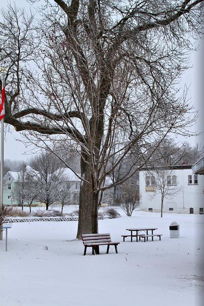 snow tree_2999