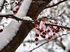 1First Snow_2536
