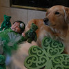 St. Patrick's Day : 2 galleries with 45 photos