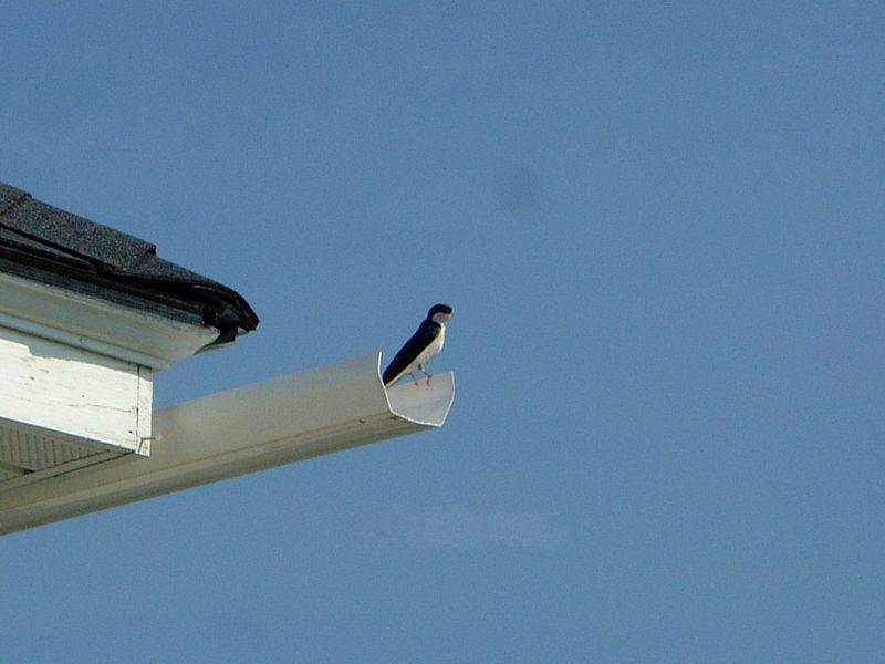 010 Bird in Gutter