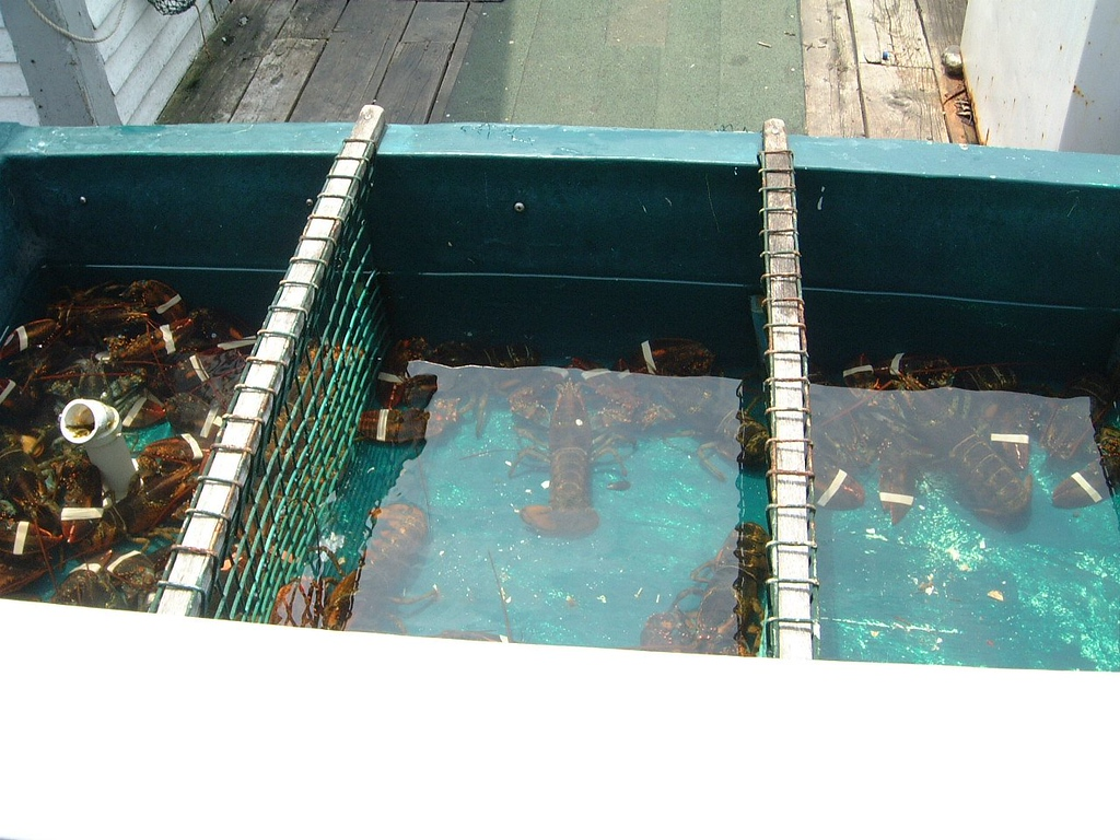 030 Lobsters