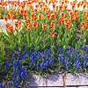 More beautiful springtime flowers...