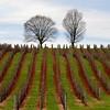 195 acres of vines.