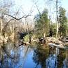 Anthony & Dalton's fishing hole on the Chickahominy River.