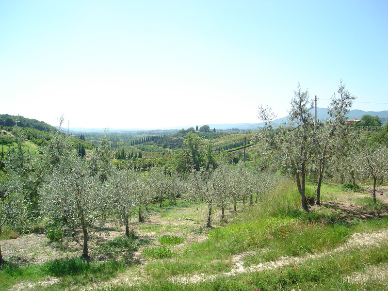 OLIVE GROVES AT QUERCE AL PINO