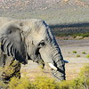 "Afrikan elephant in <a href=""https://www.facebook.com/Aquilasafari/"">https://www.facebook.com/Aquilasafari/</a>"