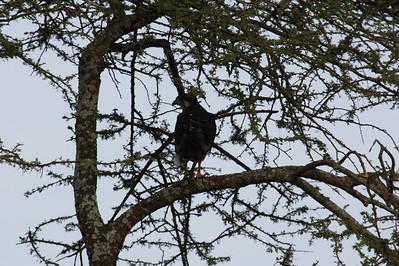 Tanzania: Part 2 Serengeti