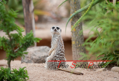 Meerkats had to be one of the largest attractions at the park. Brilliant personallitys.