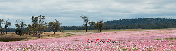 Our drive down to Hobart was often helped along by being able to look at beautiful scenery such as these paddocks of flowers.
