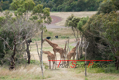 Werribee wildlife park.