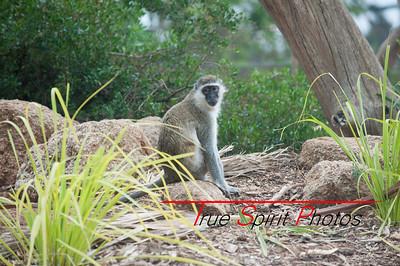 Werribee wildlife park.