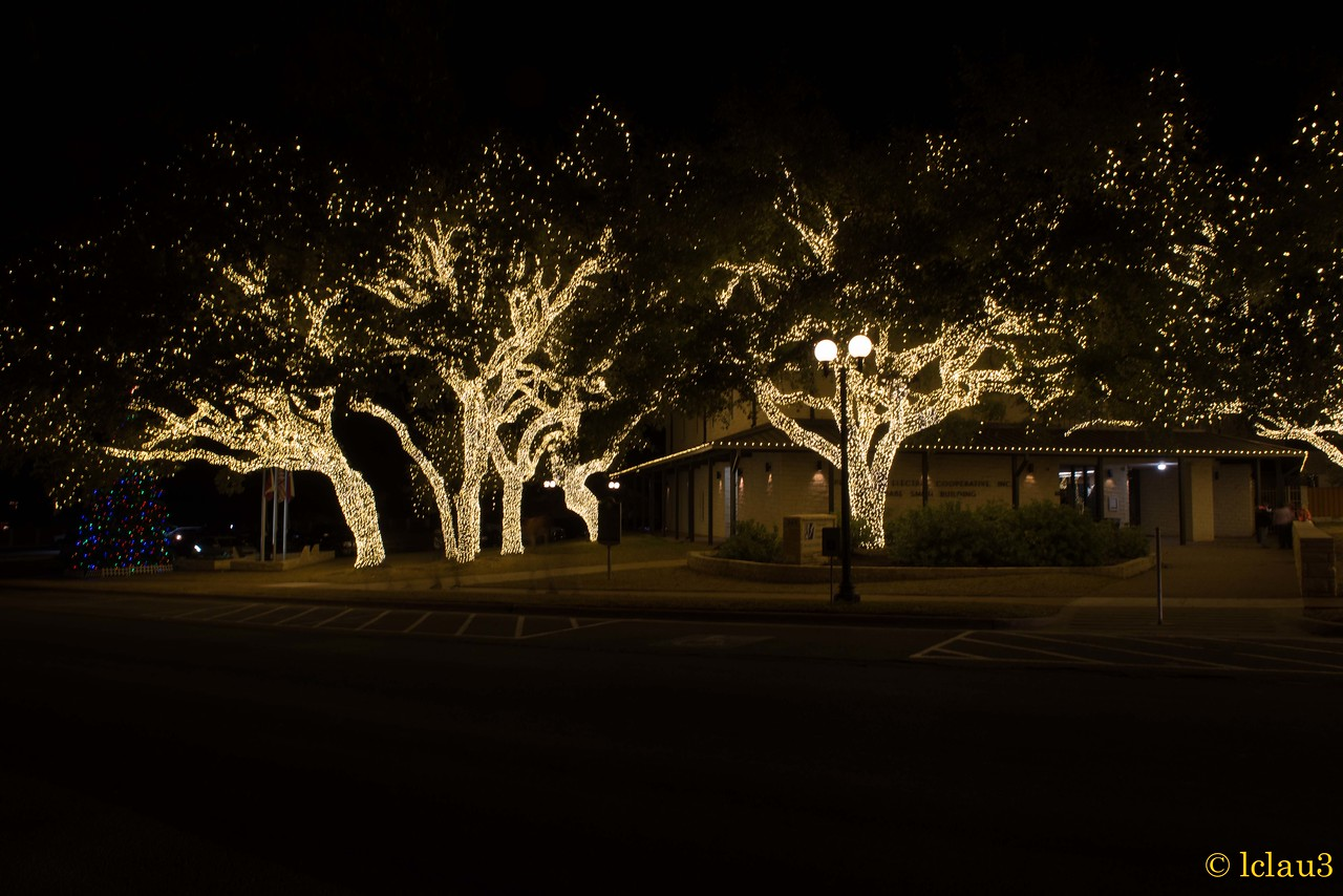 Downtown Johnson City.  There were over 50 trees with lights.